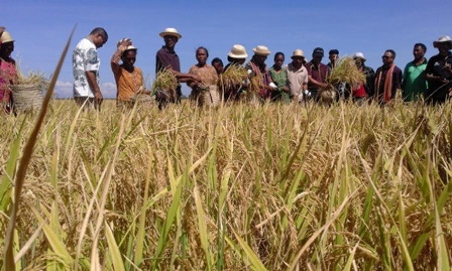 TL Tama ASEAN, Seitor Agrikultura Preparadu